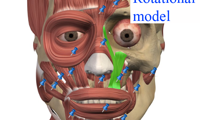 Visual Anatomy Free. Aplicación de anatomía - Fisioterapia en Pozuelo