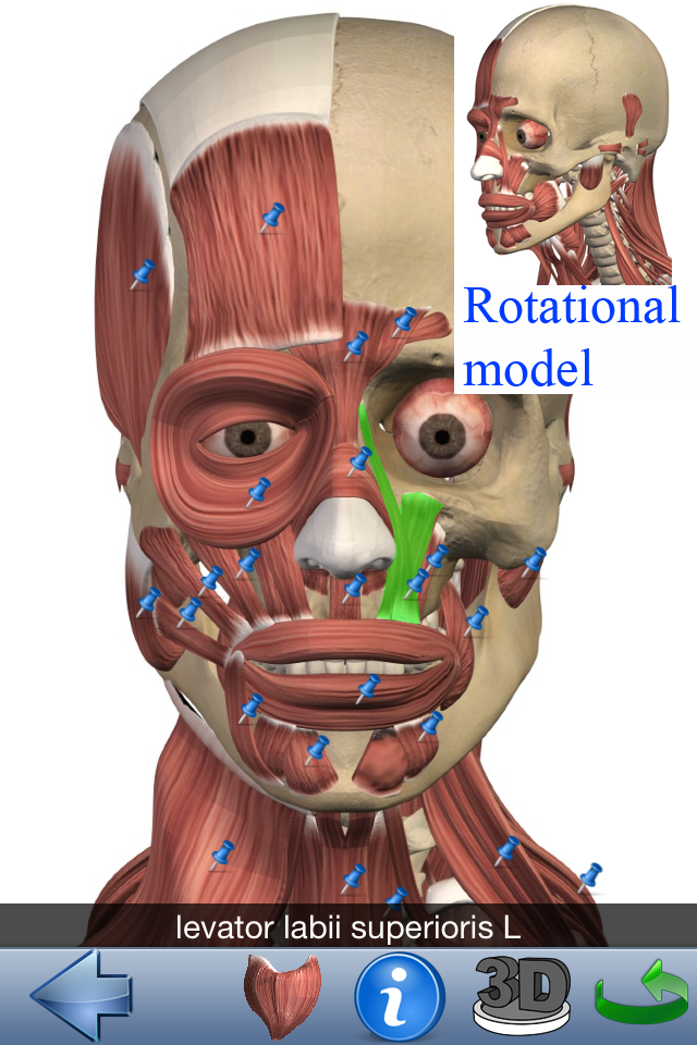 Bonito Visual Anatomía 3d Imágenes - Anatomía de Las Imágenesdel ...